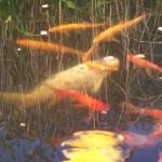 Nad oczkiem wodnym (9)