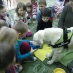 zajęcia edukacyjne z udziałem psów (4)