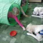 zajęcia edukacyjne z udziałem psów (5)