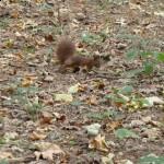 Spotkanie z jesienią w parku (4)