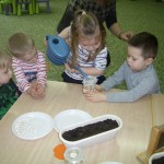 Tworzymy zielony kącik (3)